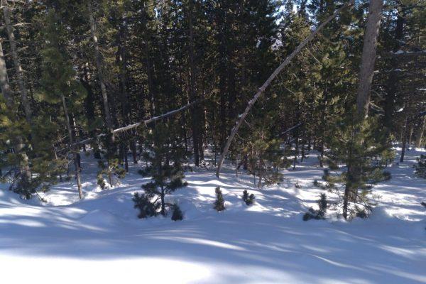 nevada baixa